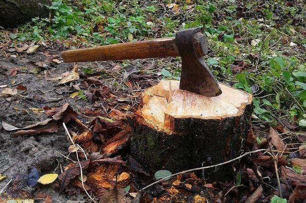 рубають дерева