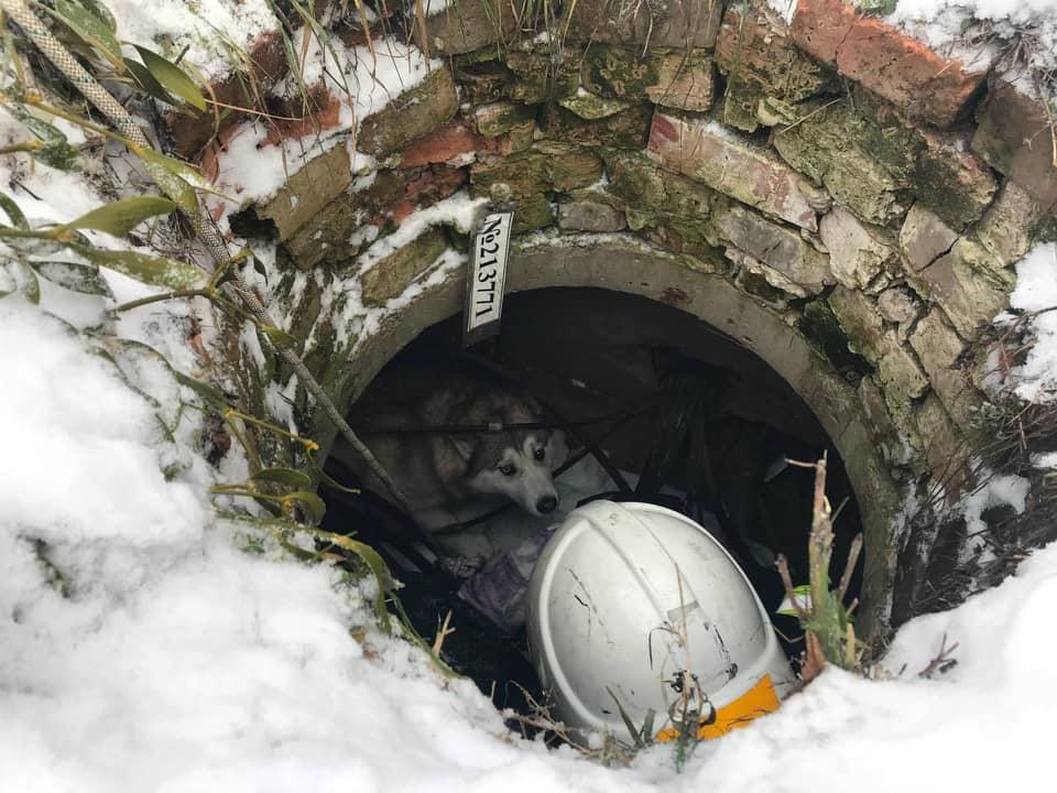 Шукають господаря собаки, якого рятувальники витягнули із каналізаційного колодязя